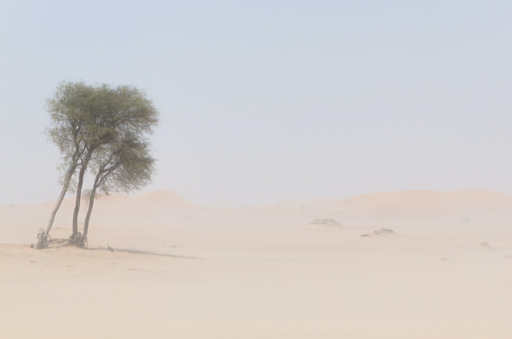 desert tree robert metz unsplash