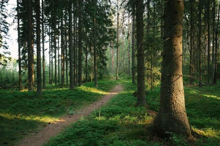 verla forest trail