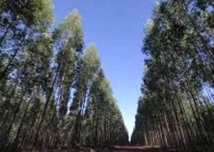 china forestal suelos